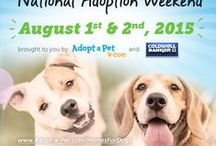 Adopt-a-Pet.com News + Pet Adoption Campaigns / by Adopt-a-Pet.com