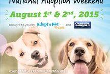 Adopt-a-Pet.com News + Pet Adoption Campaigns