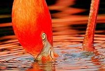 I see Orange :)  / I love this colour.