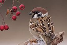 Birds【Sparrow】 / 神戸・六甲山ホテルスタッフの「四季折々」のスズメがよく登場します。大ファンです( ´艸`)