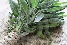 kruiden & specerijen / herbs & spices