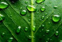 groen / green