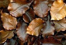 bruin / brown