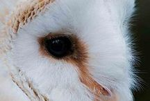 Obsessed with Owls / Owls, Owls, Owls!