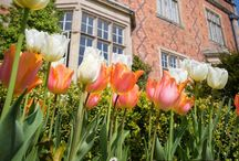 Gardens / Gardens at Willington Hall. The ideal photograph backdrops for any occasion.