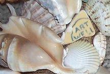 gekleurde schelpen / colour shells