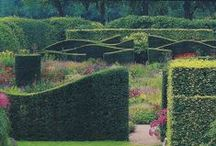 Green Structure / Hedge, topiary, pleached, espaliers, columns, parterres, grass, walls, allees, in context / by HEDGE Garden Design & Nursery
