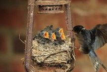 Birds【Swallow】