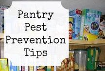 Pantry Pests / Insects
