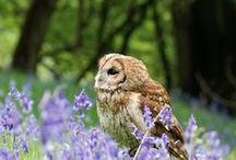 Birds 【Owl】