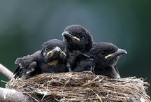 Birds 【Crow】
