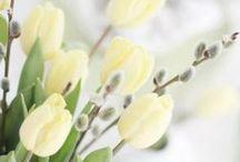 lente & geel / yellow spring