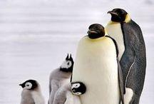 Birds【Penguin】