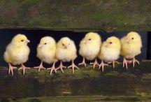 Spring & Easter【Birds】