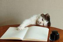 本まわり【栞の代わりになるうたた寝する猫とか】