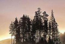 Trees【木のシルエット】