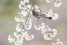 Birds【ヒヨドリ】