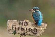 Birds【Kingfisher】