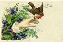 ♥ Vintage Flora und Fauna ♥