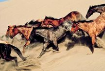 Mustang - wild horses / by Lucka Royal