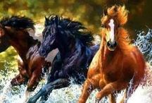 Equine art / by Lucka Royal