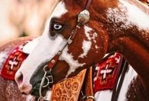 Paint horses & Pintos / by Lucka Royal