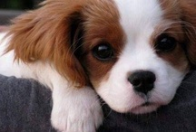 Puppies!! / They are gorgeous, aren't they!! I love you little pups!!