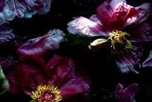 Aubergine, violet, mauve / Violet, aubergine, mauve, lilas