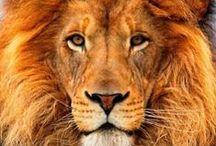 Amazing Animals / Spectacular Animals of Nature