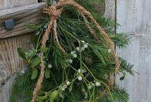 Branche de gui - Mistletoe