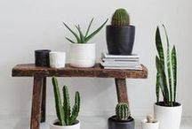 P L A N T S / A collection of plants to inspire a energizing home.