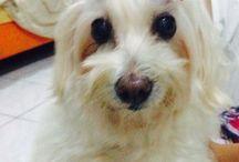 My Baby  / Millie the Maltese