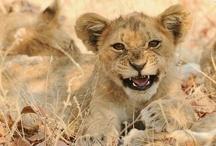 WILD kitties / by Tabasco Muffin