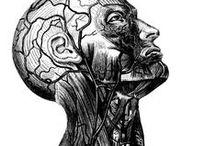 Medical Illustrations