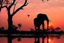 Afrique/Africa