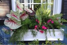 Window Boxes / by Crabtree's Corner
