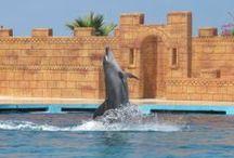 Dolphin Show Turkey