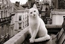 Cats / by Dalia Barja
