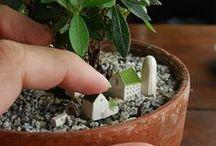 PLANTAS y cultivo