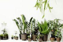Plants / Green.