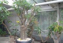 Green / Unusual greenhouse plants