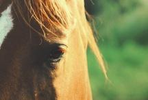 Horses / by Amber Hoback