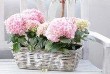 Baskets & Co ♥...