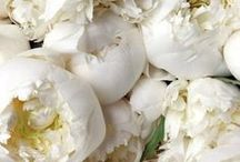 White ♥...