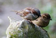 Birds ♥...