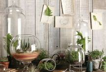 HOME : Apothecary / jars, display, garden, eggs, flowers, soaps, mantle