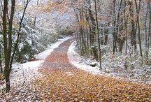 Paths, Gardens & Quiet Spaces / Intriguing Paths, Gardens & Quiet Spaces