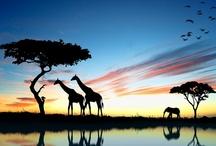 On Safari / by Cinda Justice