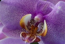Orchid Exotica / by Cinda Justice