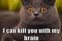 Funny / Cat memes :-) Brighten your day!